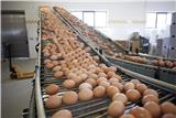 Grading facility puts its eggs in the Rotamec basket