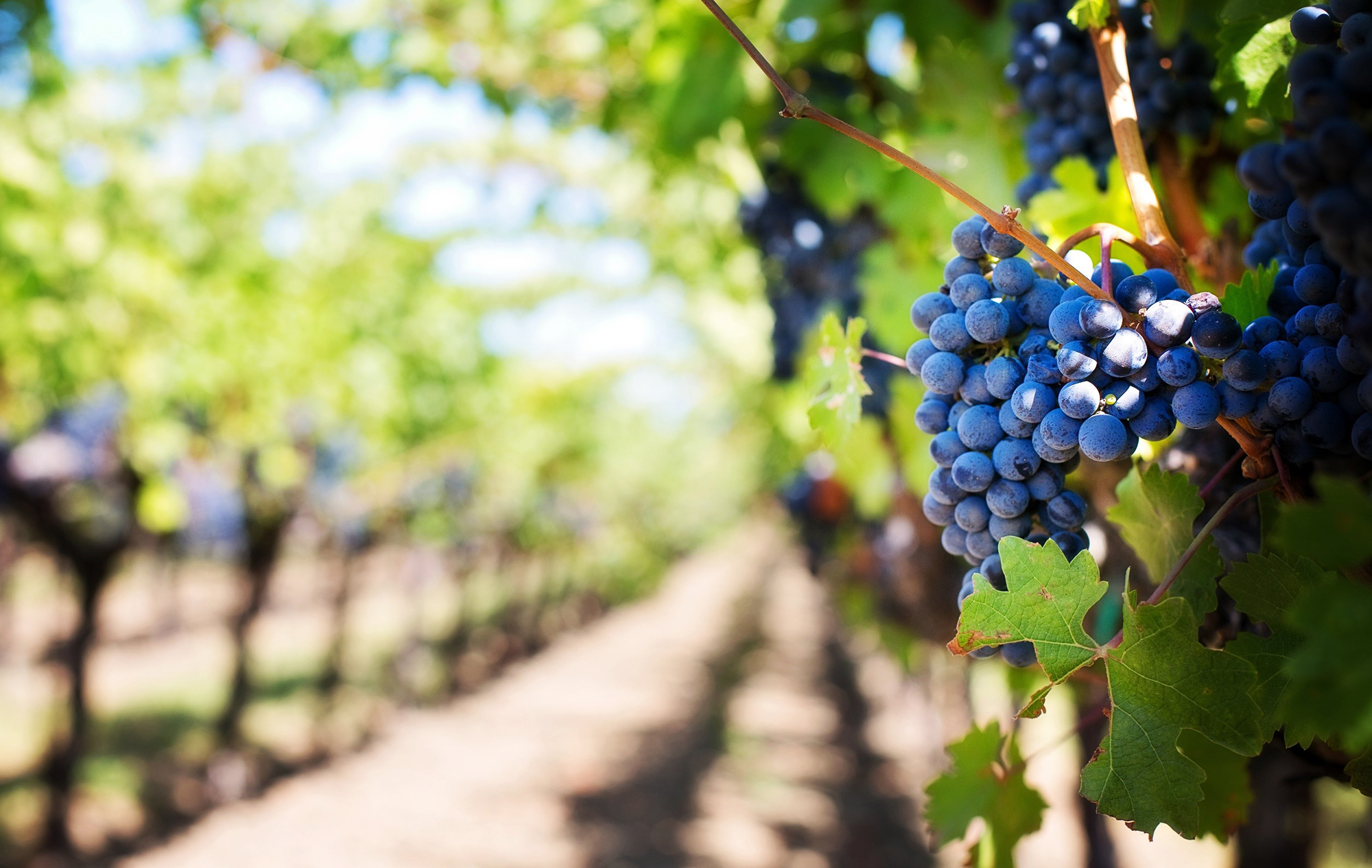 Movicon SCADA supports one of Italy's largest winemakers